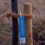 Das NABU-Schild - für jedes Kind mit Namen und Pflanzdatum als Andenken und zum Wiederfinden des eigenen Baumes angefertigt.