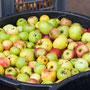 Jedes Kind brachte Äpfel mit...