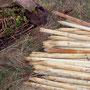 Stützpfähle und wurzelnackte Stiel-Eichen, Feld-Ahorne und Walnüsse warten auf ihre Abnehmer.