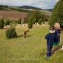 Ziegen und Schafe beobachten,