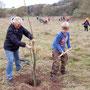 NABU-Aktive Heidi Schwabe hilft dem Grundschüler Florian beim Pflanzen seines Walnussbaums