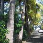 Accès direct à la plage depuis l'allée de cocotiers