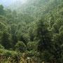 El bosque.