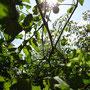太陽に照らされたミニトマト