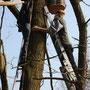 Verschiedene Vogelkästen werden an die Bäume gehängt