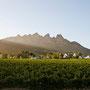 Das Weinland