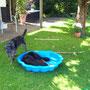 Hunde spielen auch verstecken