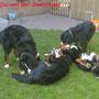 Alix, Sammy, Alena und Wicki beim Welpentreffen