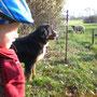 Jonna und Lotte gleichermaßen von den Schafen angetan