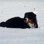 Ein Berner liebt den Schnee