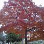 千葉で見つけた秋。