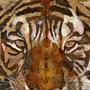 Sguardo di tigre