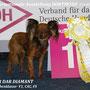 Russischer Toy Sher Dar Diamant- V1,CAC ( Dortmund 11.05.2013)