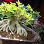 Chatuchak Pflanzen Markt