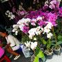Green-Mango Bangkok Touren: Chatuchak Pflanzen Markt