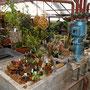 kein Gewächshaus ohne Pflanzen.