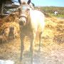 Susi in ihren Blütenjahren (Mama von Rowdy)
