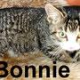 5.1.21 Bonnie