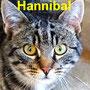 14.4.20 Hannibal