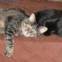 Tigerle und Lara