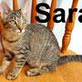 2.11.20 Sara