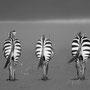 Vers l'horizon - Fernand ALBERT