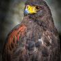 3eme - Portrait d'oiseaux de Fabien Marchand