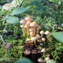 2. Platz (Orientierungsstufe): Pilzwäldchen von Lilly W.