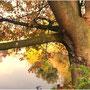 3. Platz (Mittelstufe): Mein goldener Herbst von Mina T.