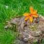 Auch hier kommt das Orange durch den Baumstumpf zur Geltung, weniger durch das grüne Gras.