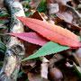 2. Platz (Oberstufe+):Die bunte Vielfalt des Herbstes von Jana W. und Joke K.