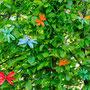 Fast schon ein Suchspiel: Rot wirkt (Komplementärfarben), Orange weniger, Blau und Grün verschwinden fast gänzlich.