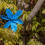 Blau in grünem Ambiente: Es kommt wenig zur Geltung und beißt sich auch ein wenig.