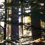Herbstlicht von Carolin S.