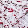 """1. Platz (Orientierungsstufe): """"Beeren im Schnee"""" von Melina H."""