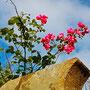 Blühendes Leben
