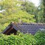 Eichelhäher auf Laubendach
