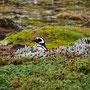 Weiter Richtung Süden zu den Magellan-Pinguinen