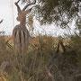 """...die drei schwarzen Striche werden von Südafrikanern gemeinhin als """"M"""" interpretiert: Löwen-Fastfood..."""