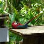 Ein schauspielerisch begabter Papagei...