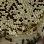 Wir kriegen auch die Bienen gezeigt...