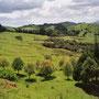 Grüne Hügellandschaft im Norden der Nordinsel