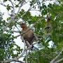 Die posieren wunderbar in den Bäumen...