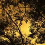 Farbenspiel in der Abendsonne