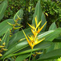 Pflanzenwelt in gelb...