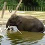 und die kleinsten Elefanten der Welt!
