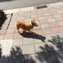 Ganz lusting in Taipei: Die Hunde passen auf sich selbst auf! Definitiv sehr gepflegt, rennen aber wie Streuner alleine rum...