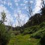 ...blauer Himmel mit weißen Tupfern...