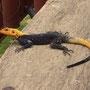 Aber die Geckos sind zumindest recht originell gestrichen... ;-)