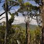 Aussicht über die Eukalyptus-Wälder